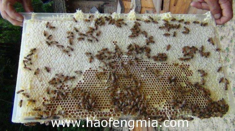 解决巢脾上的雄蜂房有办法