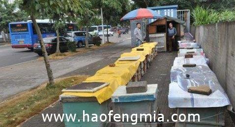在路边养蜂人那里买的蜂蜜是假的