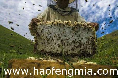 四川广安子承父业养蜂   蜂蜜创业生意好