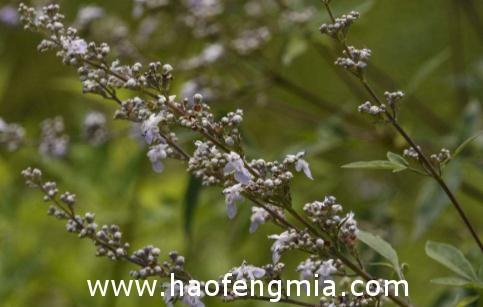 晋城荆条花蜂蜜获国家农产品地理标志认证