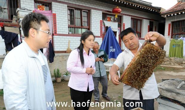 天水市养蜂业已初步形成特色优势