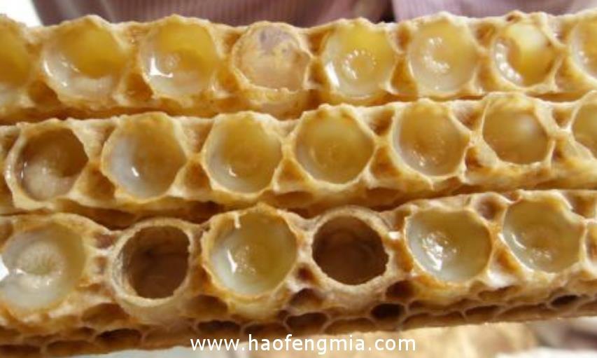 蜂王浆是如何采集的