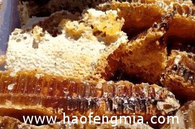 天暖蜂蜜产量多 彰市蜂农评价高