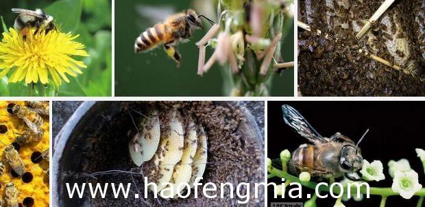 康家梁村中华蜜蜂标准化养殖取得丰收