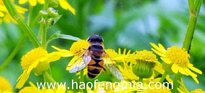 蜜蜂的春季管理