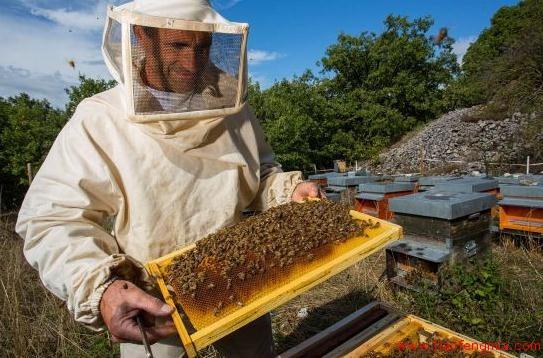 俄罗斯养蜂组织