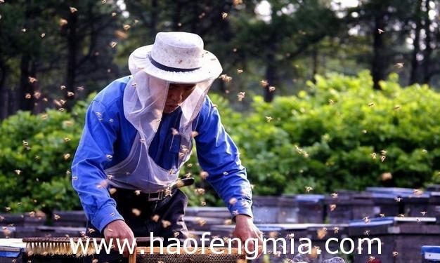 七江镇养蜂人 :养蜂脱贫奔小康