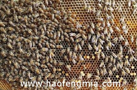 蜜蜂工蜂产蛋如何处理
