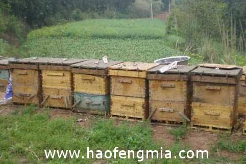 常用的养蜂工具有哪些