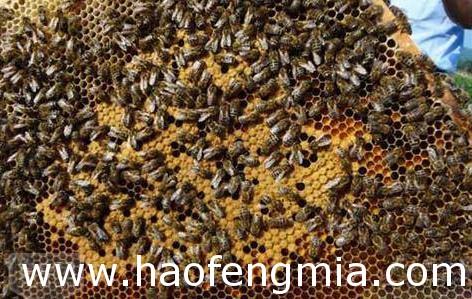 意蜂蜂蜜和中蜂蜂蜜的区别