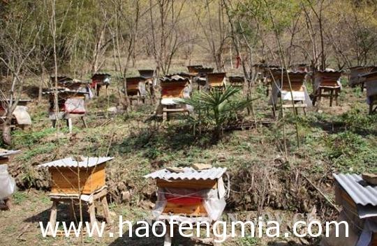 养蜂效益分析