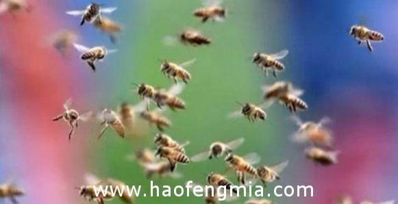 箱外观察看蜂效率高