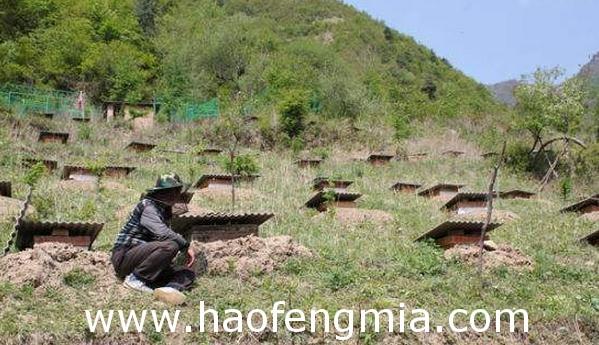 什寒村:村民发展养蜂产业  生活蒸蒸日上