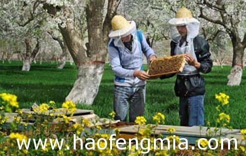 湖北养蜂业之湖北养蜂管理介绍