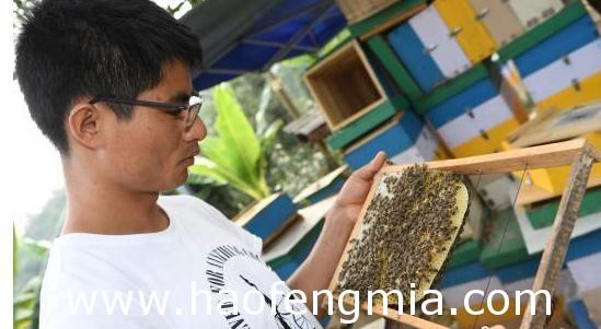大学生养蜂人:云志勤普洱蜂蜜创业获成功