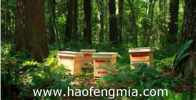 研究生蜂蜜创业:卖老家蜂蜜  先送一瓶
