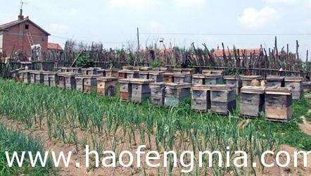 第一书记帮村民销蜂蜜