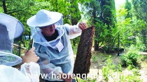 80后青年的返乡蜂蜜创业:养蜂卖蜂蜜做出新模式