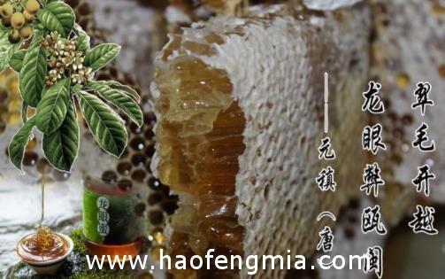 广西龙眼蜂蜜介绍
