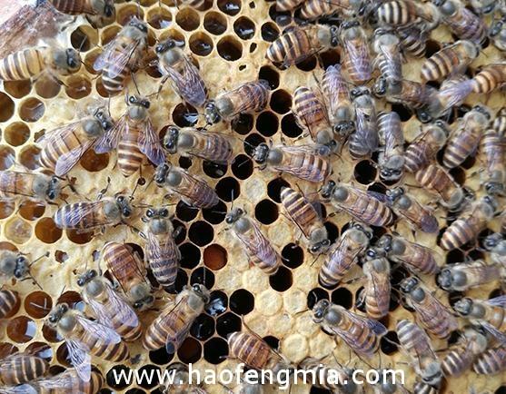 你吃的真是蜂蜜?蜂蜜与花蜜有区别