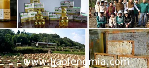 蜂蜜产业烦恼:劣质蜂蜜充斥市场