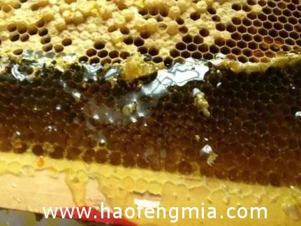 党参蜂蜜的食用方法