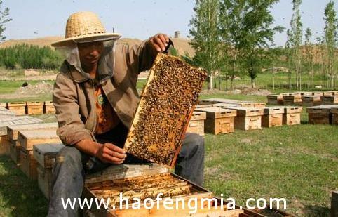 我国果树类蜜蜂粉源植物分布介绍