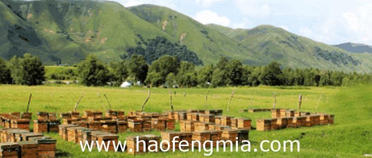 辽宁养蜂业之蜂产品开发与经营