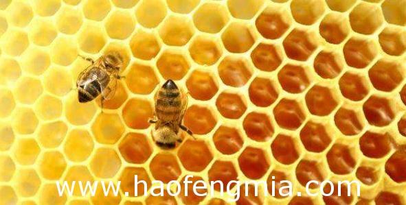 枣庄市食药监局召开全市蜂蜜产品生产企业约谈会议