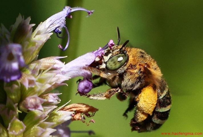 神奇的蜜蜂