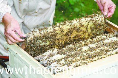 夫妻蜂蜜创业:自驾房车放蜂采蜜游全国