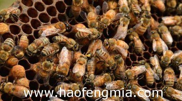 夏季蜂群管理常见问题