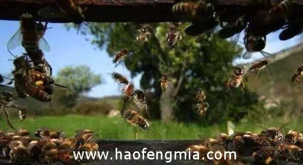 甘肃省食药监局通报抽检蜂产品   1批次土蜂蜜不合格