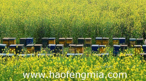 罗平积极打造蜂蜜地理证明商标品牌