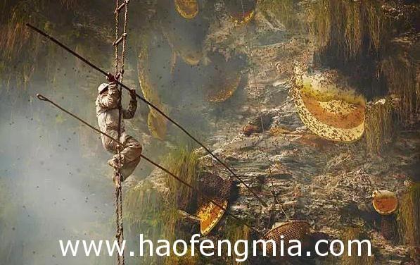 尼泊尔古隆族人:蜂蜜猎人艰辛采蜜