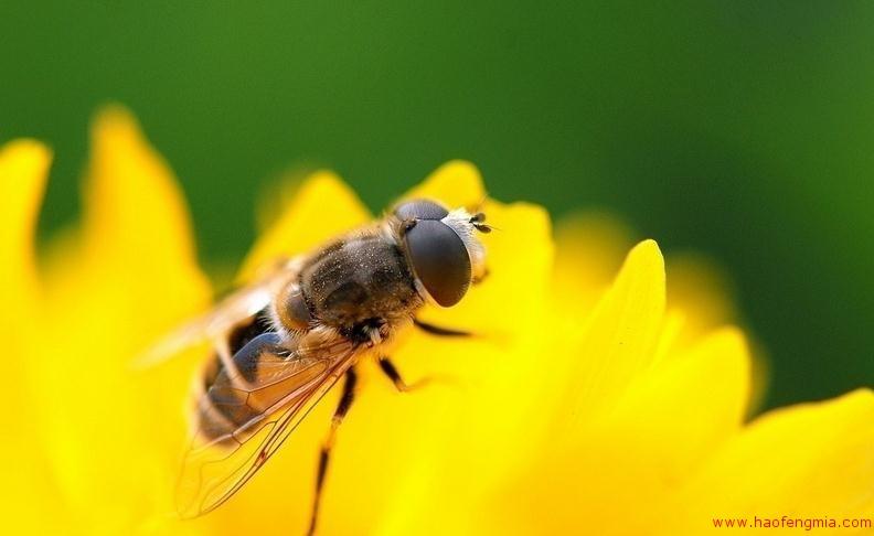 美国农业部蜜蜂研究机构