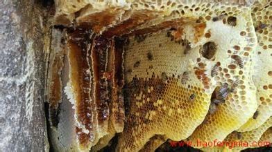 韩国大学教授带优质土蜂蜜回国