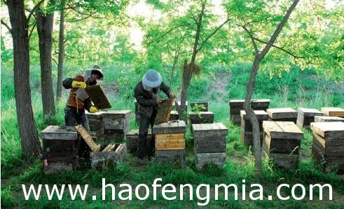养蜂能人签约农户养蜂    实现双赢
