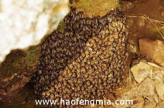 春夏季生产期如何管理蜂群