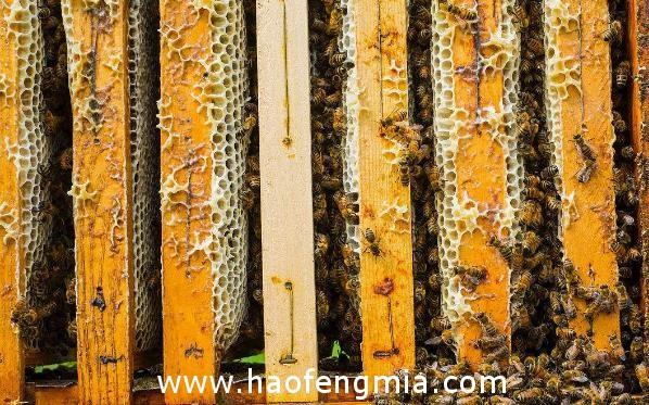 蜂蜜品质如何判定