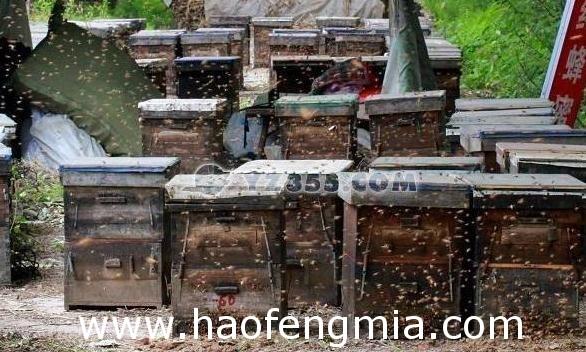 蜜蜂开箱要注意哪些事项?