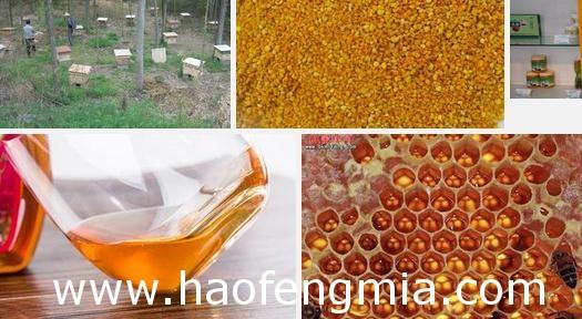 海南组建蜂产品流通协会助力脱贫攻坚