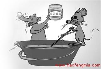 汉中夫妻二人制售假蜂蜜 被判处有期徒刑
