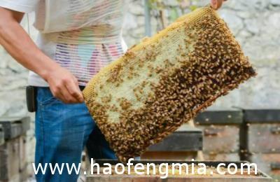 临海两男子偷蜂蜜做微商被刑拘