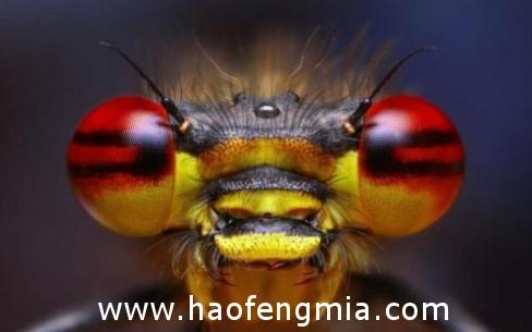 眼睛被蜜蜂蛰了怎么办