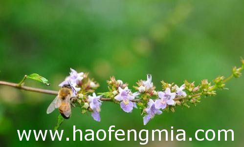 临沂蜂蜜年产量居山东省第一