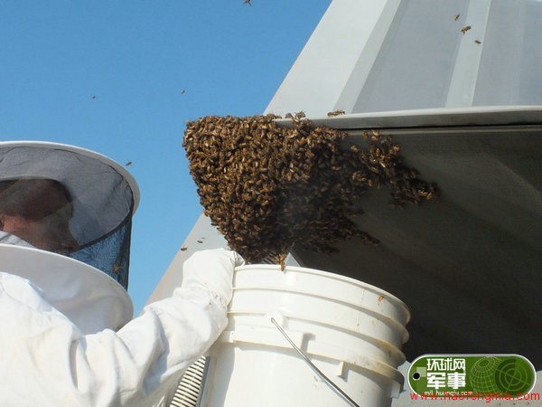 美军F-22五代机尾喷管长出蜂巢 收获大量蜂蜜