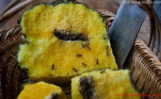 中国天然蜂蜜推荐平台南京举行推广会