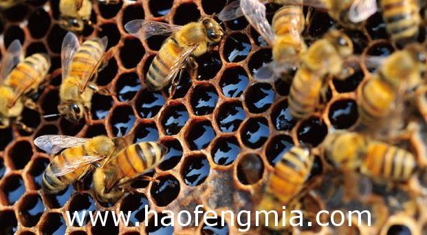 那坡县百省乡坡同村依靠生态养蜂致富
