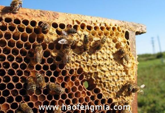 保国传统上每年蜂蜜出口在7-8千吨
